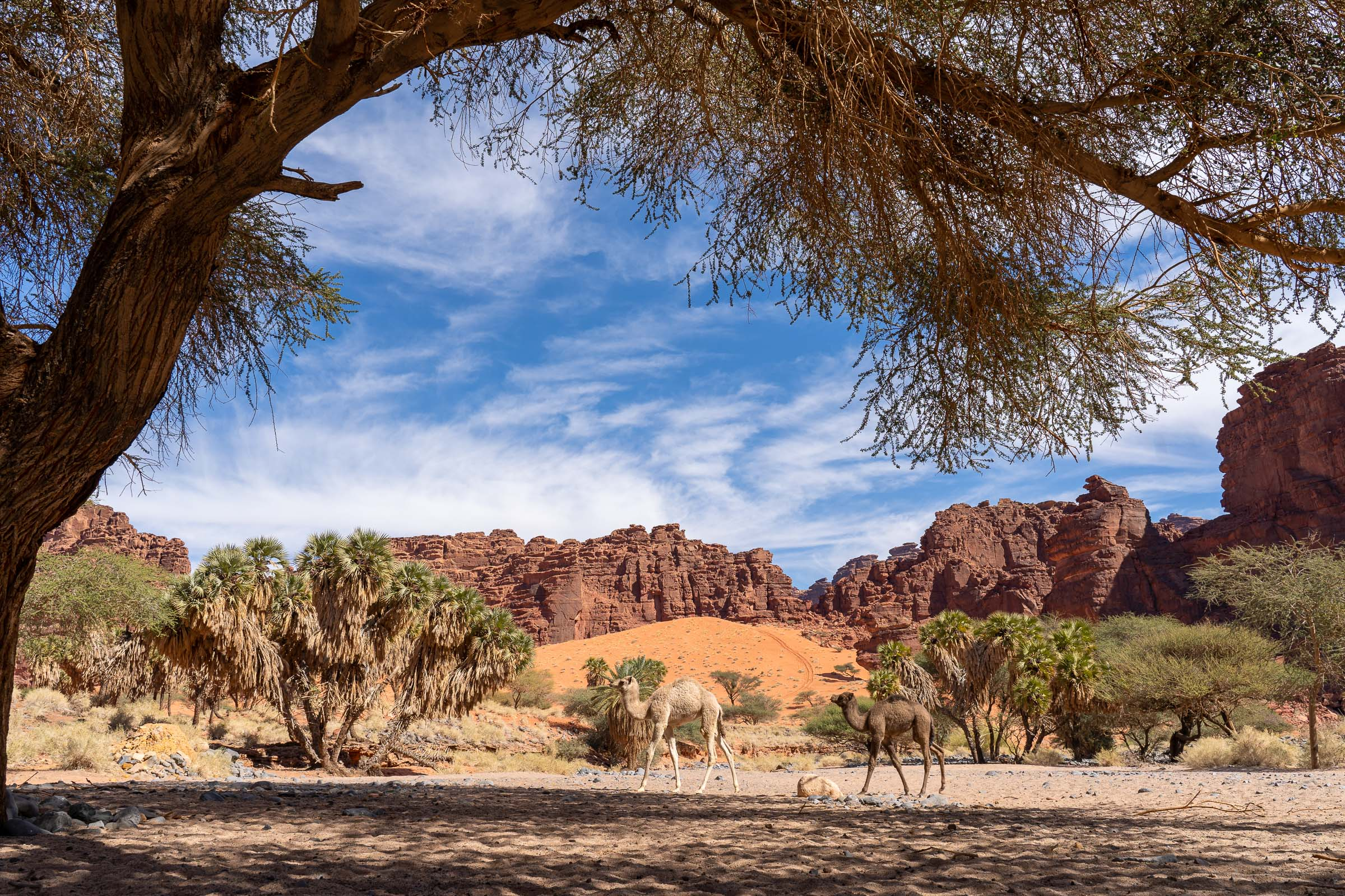 wandelen door woestijnlandschap Saoedi-arabië